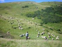 Moltitudine di pecore, pastore, le montagne carpatiche Immagine Stock Libera da Diritti