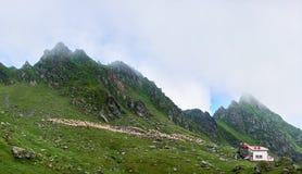 Moltitudine di pecore sul pascolo alpino in montagne di Fagaras della valle Immagini Stock Libere da Diritti