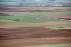 Moltitudine di pecore sulla pianura Fotografie Stock Libere da Diritti