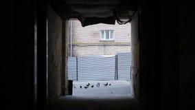 Moltitudine di piccioni che selezionano le rimanenze nel backstreet sporco, scena del crimine, cattivo segno video d archivio