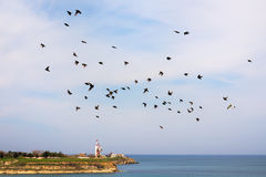 Moltitudine di storni in volo Fotografia Stock Libera da Diritti
