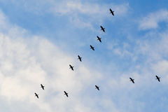 Moltitudine di uccelli Immagini Stock