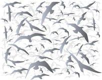 Moltitudine di uccelli Immagini Stock Libere da Diritti