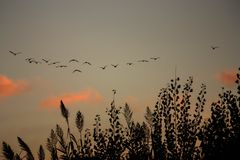 Moltitudine di uccelli Immagine Stock