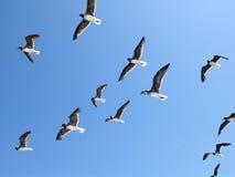 Moltitudine di uccelli Fotografie Stock