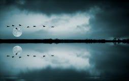 Moltitudine di uccelli a fullmoon Immagine Stock