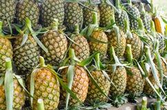 Molto ananas immagine stock libera da diritti