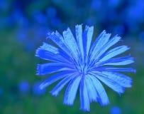 Molto blu Immagine Stock