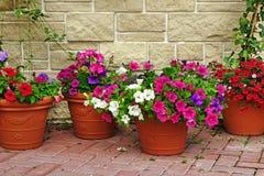 Molto Clay Flowerpots With Blooming Plants alla parete di pietra fotografia stock