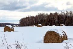 Molto fieno rotondo nella foresta di inverno, trovantesi sotto la neve, un'agricoltura rurale del paesaggio fotografia stock