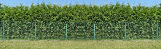 Molto lungamente barriera verde rurale fotografia stock