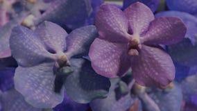 Molto orchidea viola blu, illustrazione stabilita del fondo 3d del fiore dell'orchidea Immagini Stock Libere da Diritti