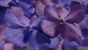 Molto orchidea viola blu, illustrazione stabilita del fondo 3d del fiore dell'orchidea Fotografie Stock
