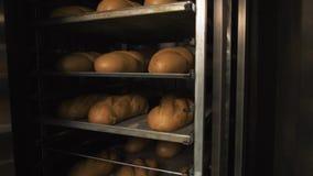 Molto pane fresco pronto in un forno per panetteria in un forno Affare di panificazione Pane fresco dai cereali con i semi Immagine Stock Libera da Diritti