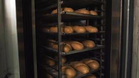 Molto pane fresco pronto in un forno per panetteria in un forno Affare di panificazione Pane fresco dai cereali con i semi stock footage