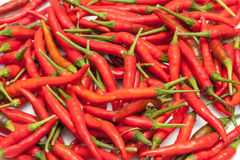 Molto peperoncino rosso, caldo rosso e piccante sulla tavola per la scelta e cucinare Immagine Stock