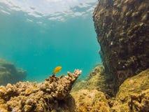 Molto pesce, creature del mare del anemonsand, piante e coralli sotto acqua vicino al fondale marino con la sabbia e pietre in bl fotografia stock libera da diritti