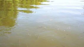 Molto piccolo movimento del pesce sotto acqua Chengdu, porcellana: pesci dell'alimentazione archivi video