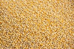Molto seme del cereale per l'animale domestico Fotografia Stock Libera da Diritti