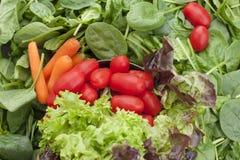 Molto spinaci freschi vanno, carote, i piccoli pomodori ciliegia, foglie dell'insalata verde Vitamine e salute in alimento Spazio fotografia stock libera da diritti