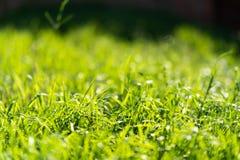 Molto verde ed erba fresca Simbolo di freschezza e naturale Colore di tonalità e di luminosità Vista del primo piano fotografia stock libera da diritti