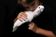 Moluccan Cockatoo With Boy Royalty Free Stock Photo