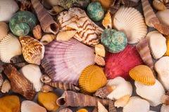 Molusce-Verschiedenartigkeit in der Farbe lizenzfreie stockfotografie