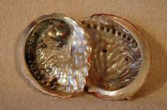 Molusco da califórnia Imagens de Stock