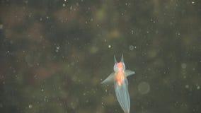 Molusco do anjo do mar vídeos de arquivo