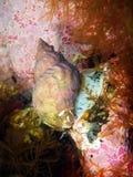 Molusco dos gastrópodes Fotos de Stock Royalty Free