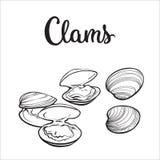 Moluscos crus isolados no fundo branco ilustração stock