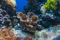 Moluscos gigantes Imagem de Stock