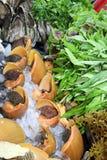 Moluscos gigantes no mercado da noite - Kota Kinabalu Sabah Borneo Malaysia Ásia fotografia de stock