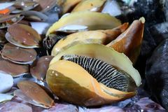 Moluscos gigantes no mercado da noite - Kota Kinabalu Sabah Borneo Malaysia ?sia fotos de stock