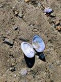 Moluscos na praia Fotos de Stock