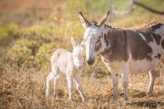 Mom and baby donkey Royalty Free Stock Image