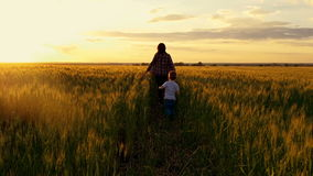 Mom and baby running across the wheat field toward the sunset. stock footage