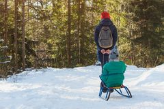 Mom carries her son on a sled through the snow-covered coniferous forest. Winter sunny day. Back view stock photography