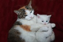Mom cat hugs a little kitten, care and love in nature. stock photos