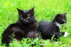 Mom cat with a kitten in the grass. royalty free stock photos