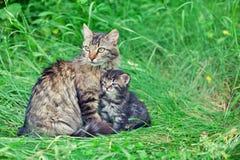 Mom cat with little kitten Stock Photo