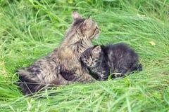 Mom cat with lttle kitten Stock Images