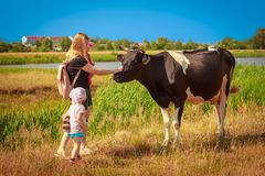 Mom and the children are stroking the cow stock photos