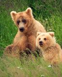 Mom and Cub stock image