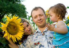 Mom, dad and baby in sunflower field Royalty Free Stock Photography