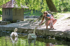 Mom and daughter feeding swans on the lake in the park Stock Image