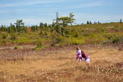 Mom with daughter piking cranberry. Dolly Sods, Monongahela National Forest, West Virginia, USA Stock Photos