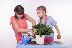 Mom and daughter spiked ground in a pot Stock Image