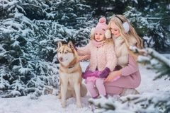 Mom and daughter walking a dog of the Husky breed in a snowy park stock photos