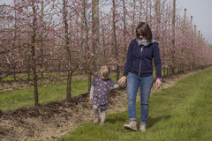 Mom and daughter walking through the orchards in bloom. Mom and girl walking in flower-filled orchards on a beautiful spring day Stock Photo